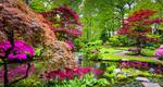 stock-photo-traditional-japanese-garden-in-the-hague-650471434-1.jpg